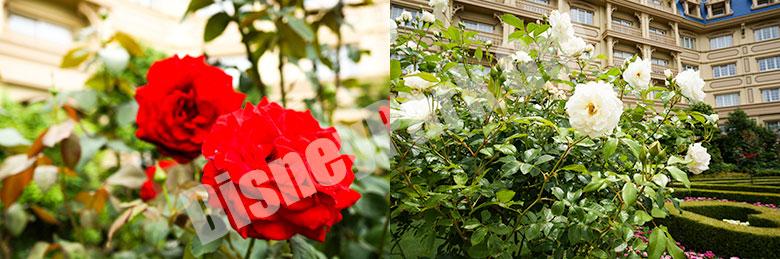 東京ディズニーランドホテルの花